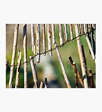 Willow Fence Photographic Print
