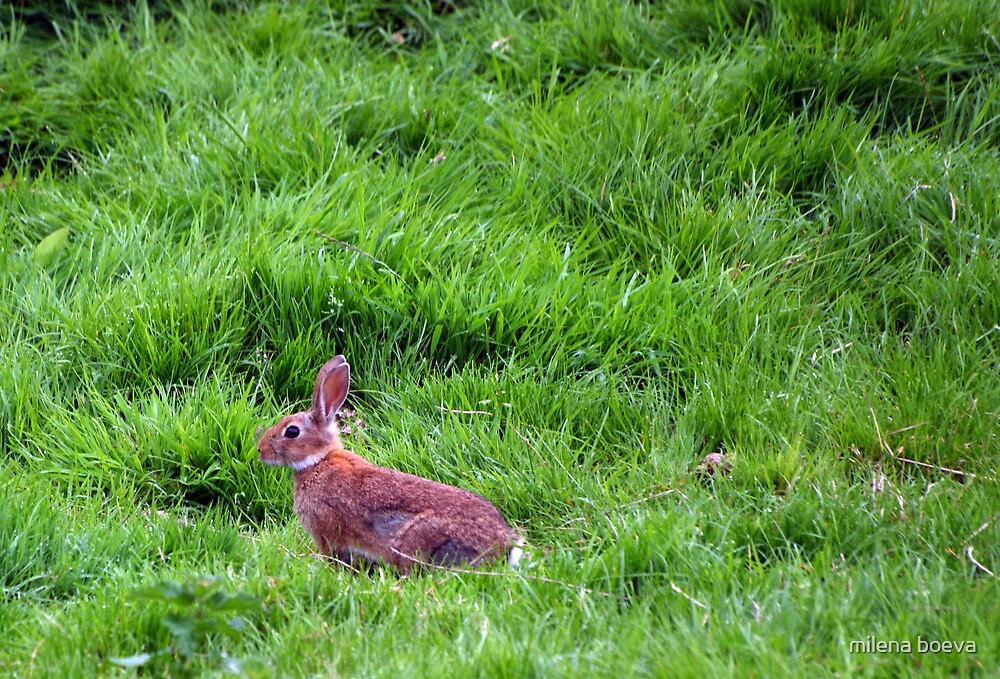 rabbit  by milena boeva