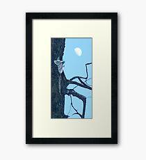 Cottonwood Knee Framed Print