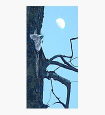 Cottonwood Knee Photographic Print