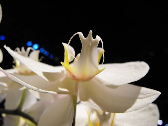 White orchid by endomental Artistry