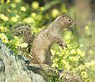 Squirrel portrait by Anthony Brewer