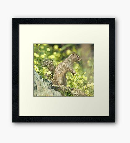 Squirrel portrait Framed Print