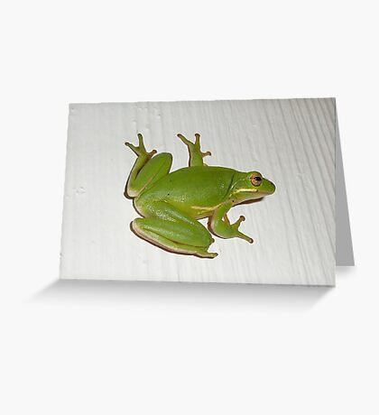 Green Tree Frog - Hyla cinerea Greeting Card