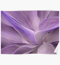 Agave Attenuata Abstract 2 Poster