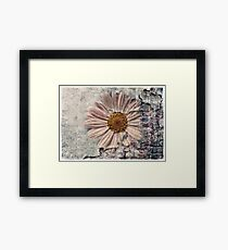 Another Decayed Flower! Framed Print