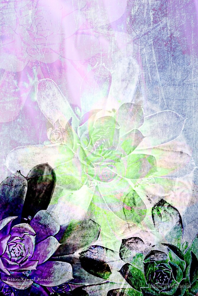 Succulent Layers by Jessica Manelis