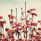 pinkmagnolia by lucy loomis