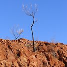 The Lone Sentinel by outbackwriter