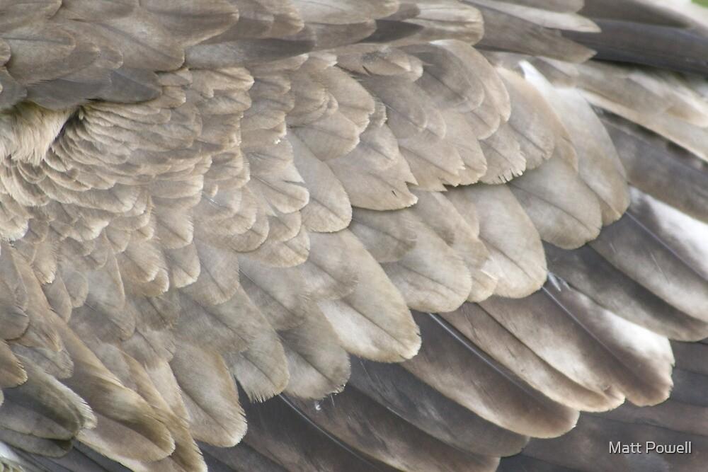 Feathers by Matt Powell