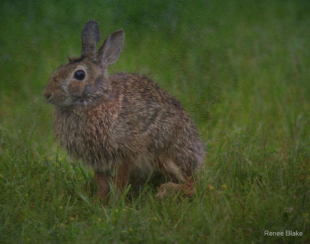 Bunny Portrait by Renee Blake