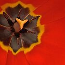 The Flag of Tulipville by Thomas Murphy