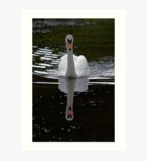 Swan@Margrove Art Print