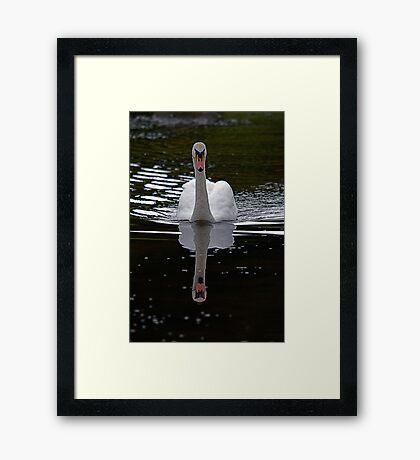 Swan@Margrove Framed Print