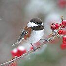 Chickadee und rote Beeren im Winter von Peggy Collins