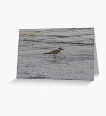 A plaintive wail Greeting Card