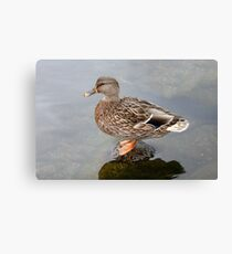 Spring Duck Canvas Print