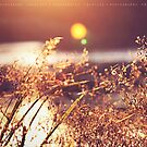 Sunset in Centennial Park by fRantasy