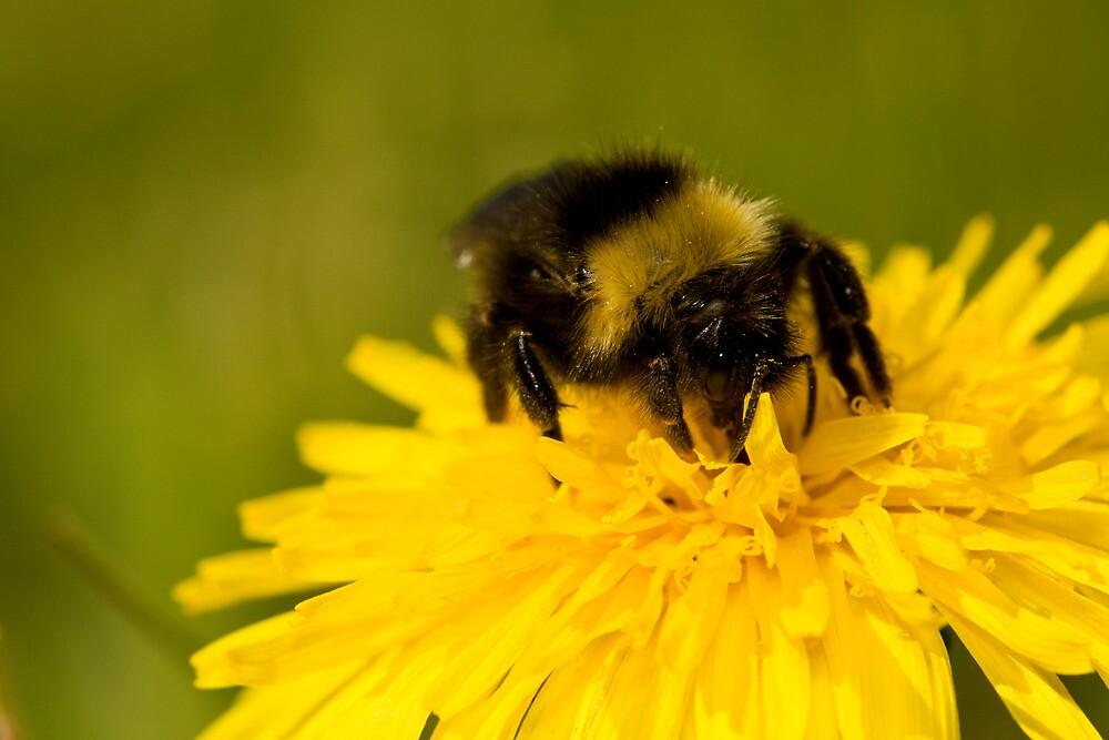 Bee by Jouko Mikkola