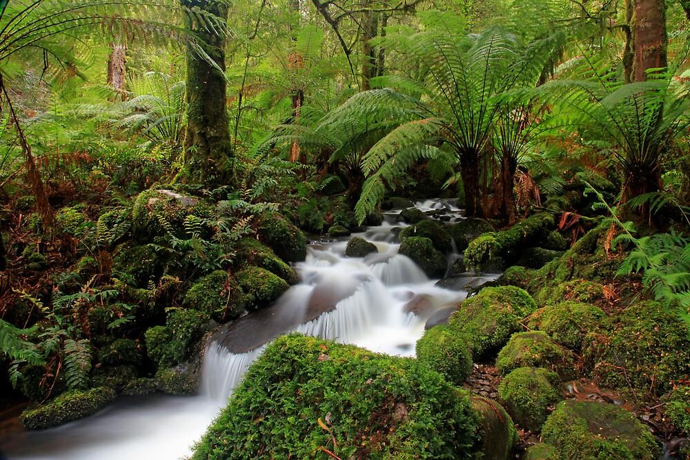 Rainforest Paradise- Yarra Ranges VIC by Cameron B