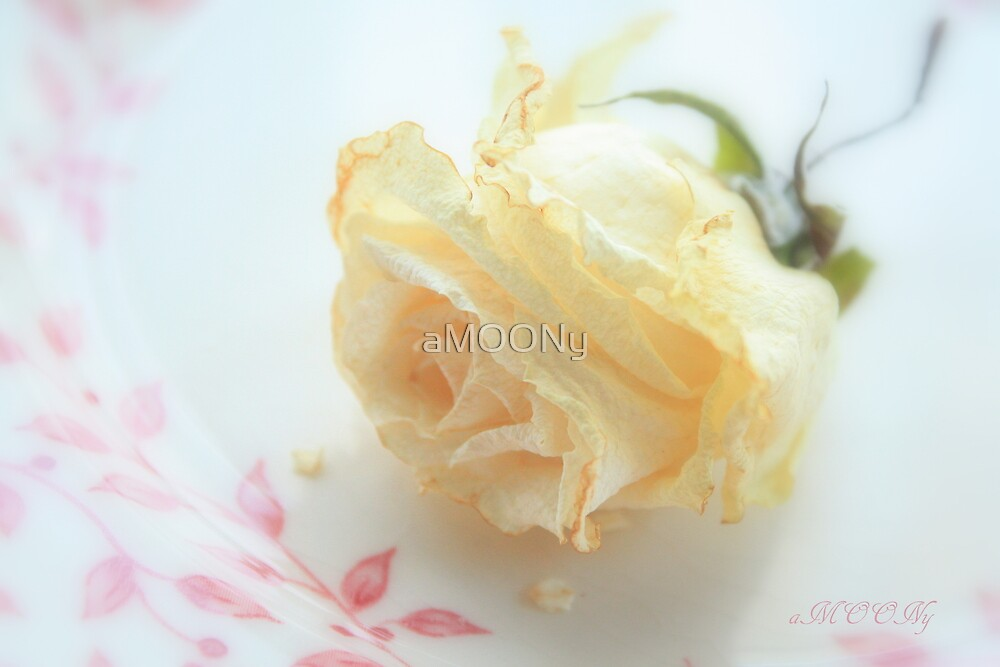 Dried Rose by aMOONy