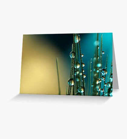 Grass Seed with blue Greeting Card