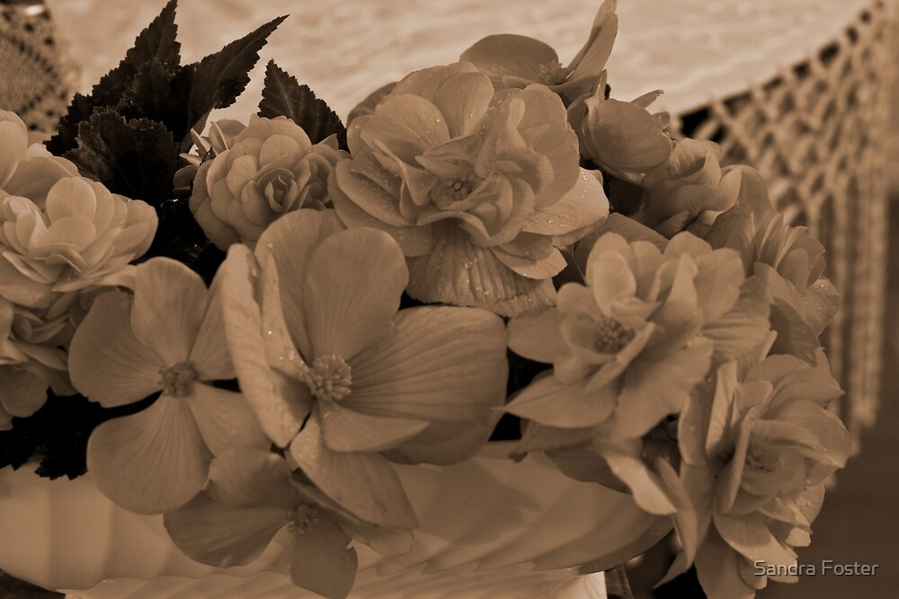 Begonias Sepia Love by Sandra Foster