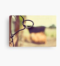 Cows are amongst the gentlest of breathing creatures Canvas Print