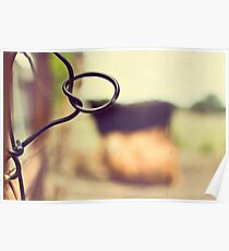 Cows are amongst the gentlest of breathing creatures Poster