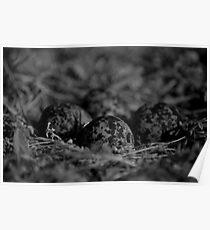 Nest... Poster