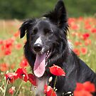 Poppy Love by Karen Havenaar
