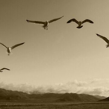 Flying Formation by Shutterbug-csg