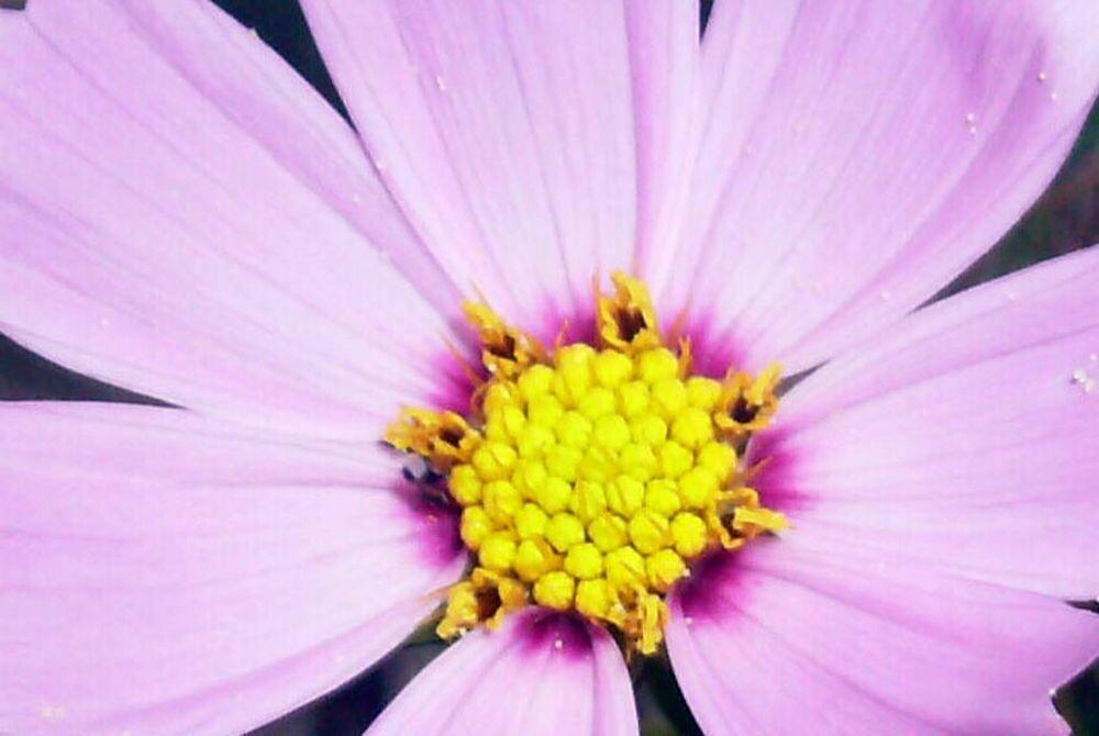Pretty In Pink by dawnsten