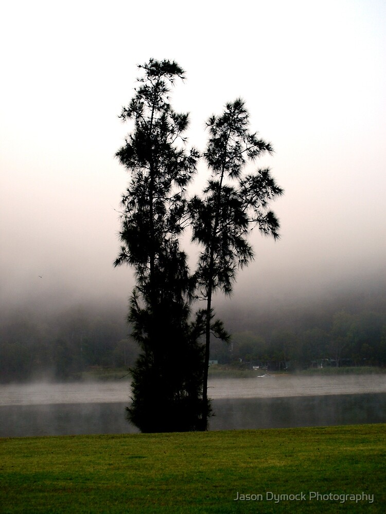 Tree in the mist by Jason Dymock Photography