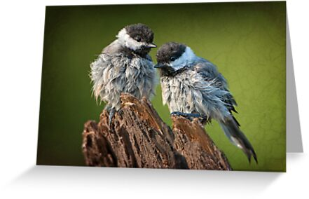 All fluffed up and nowhere to go! by Bonnie T.  Barry