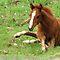 Foals Challenge