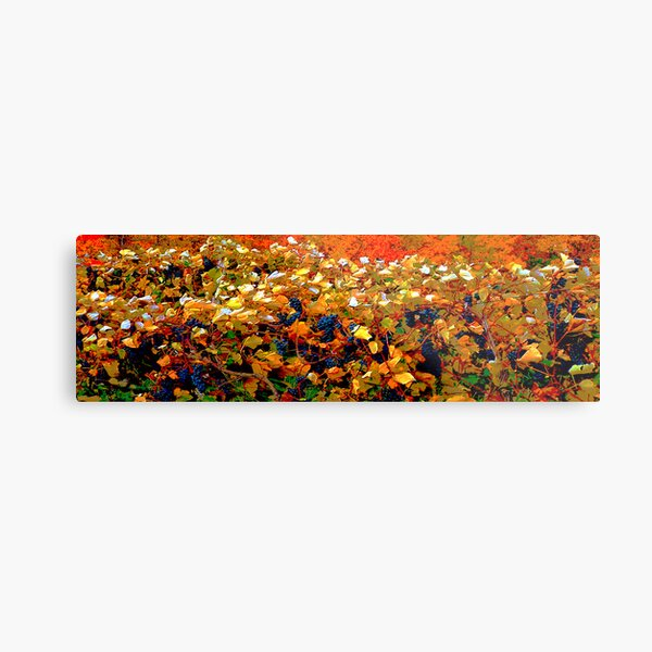 Grape Leaves in the Autumn Wind  Metal Print
