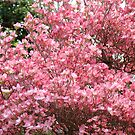 Trees Pink Dogwood Flowers art prints Baslee Troutman by BasleeArtPrints
