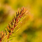 Little Branch - Red, Yellow, Green by jayneeldred