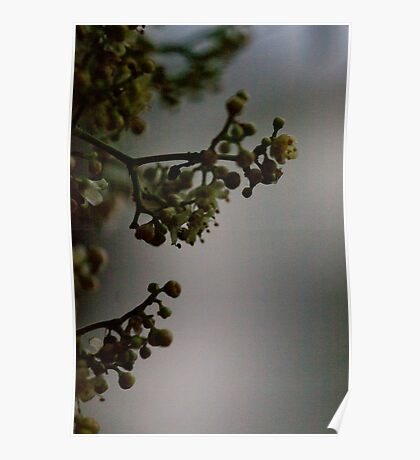 Brooding blossoms Poster