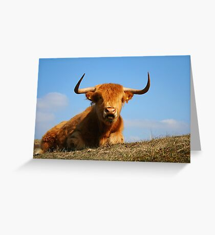 Red Highland Greeting Card