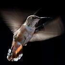 Humming Bird 02 by toby snelgrove  IPA