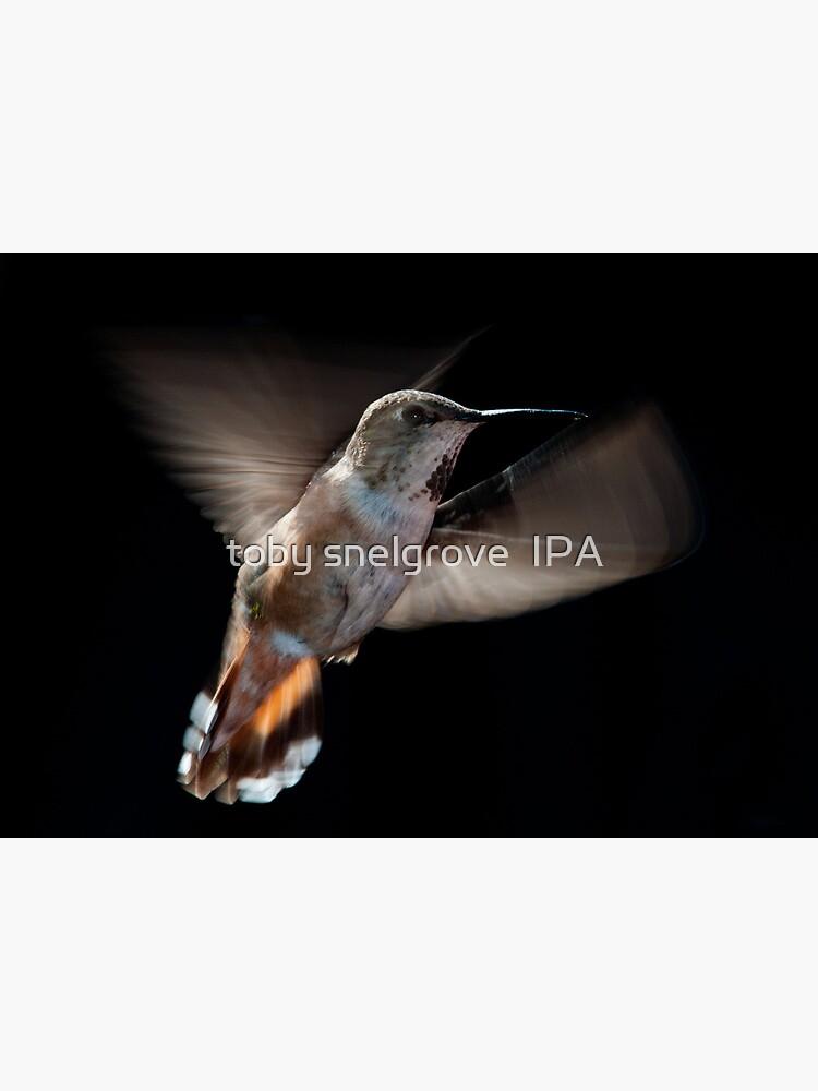 Humming Bird 02 by tobysnelgrove