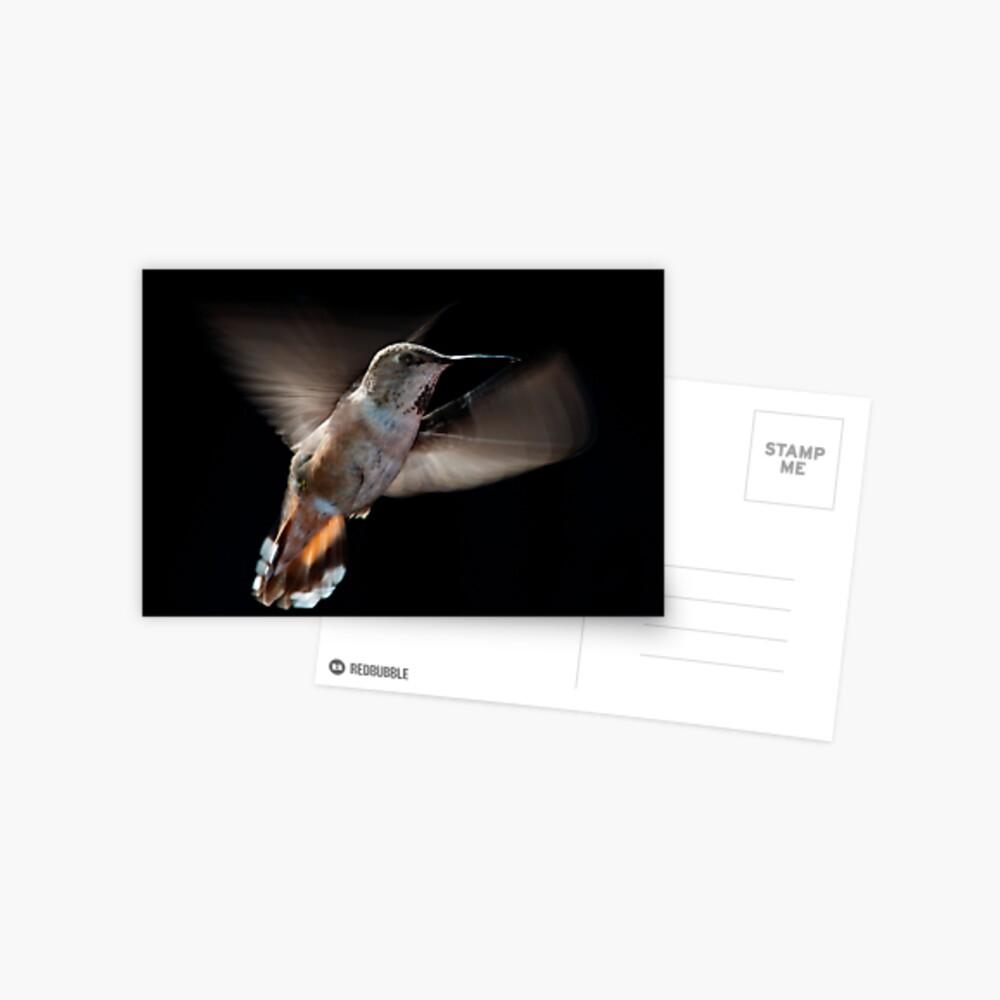 Humming Bird 02 Postcard