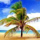 Palm Tree, San Juan, Puerto Rico by Alberto  DeJesus
