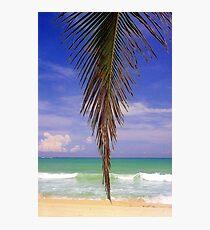 Shady Palm, Puerto Rico  Photographic Print