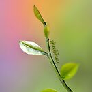 Reaching out to Spring by Shubd