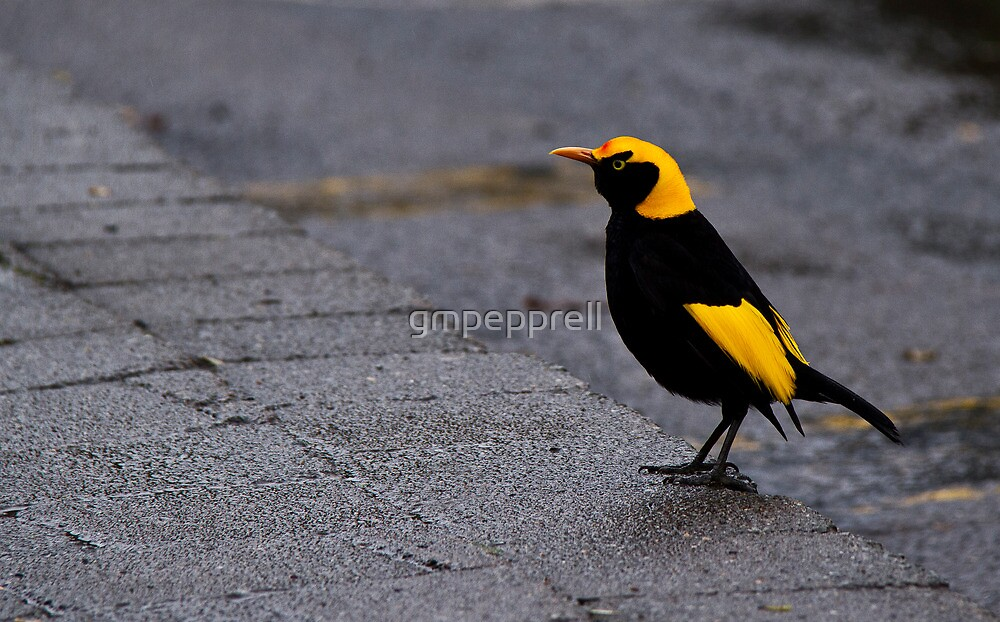 Bright Bird on a Dull Day by gmpepprell