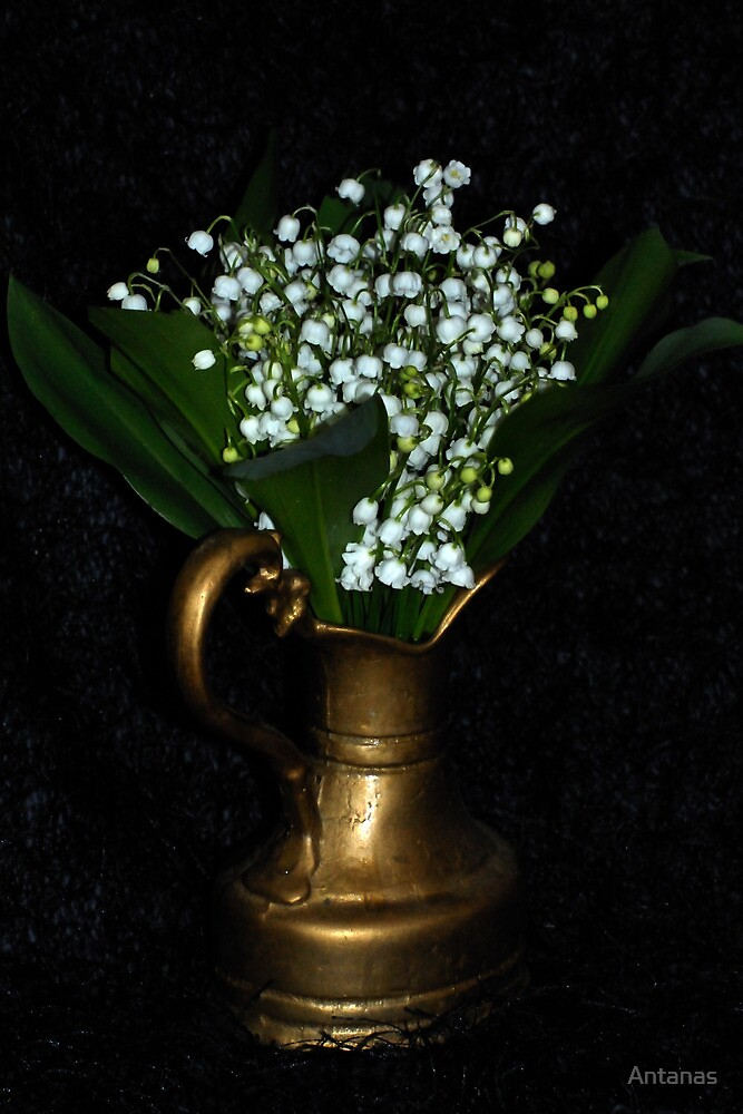 Lily of the valley by Antanas