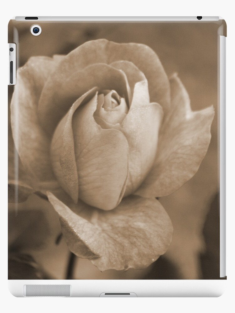 Rose in Sepia by wingsonafield